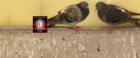 IHD Schädlingsbekämpfung und Taubenabwehr - Bild 1