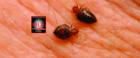 IHD Schädlingsbekämpfung und Taubenabwehr - Bild 3